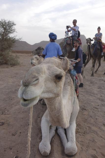 街から宿泊先のテントまではラクダにて移動。