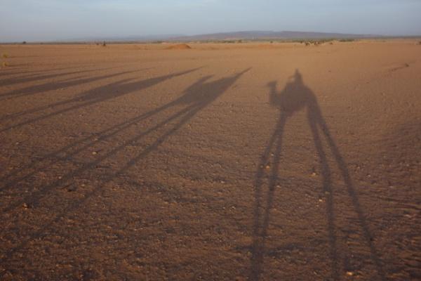 いちばん砂漠っぽい絵が撮れたのは影